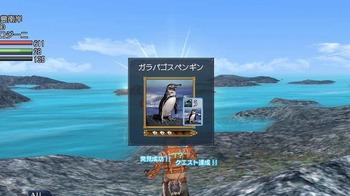ガラパゴスペンギン.jpg