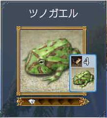 ツノガエル.JPG