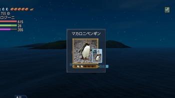 マカロニペンギン.jpg