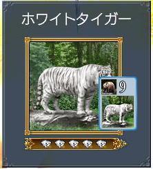 白虎さん.JPG