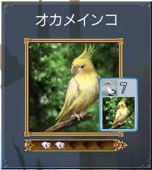 オカメインコ.JPG