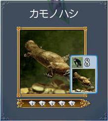 カモノハシ.JPG